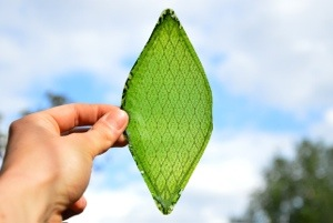 artificial leafs